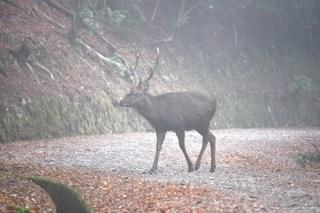 20101221 奥山の牡鹿2.jpg