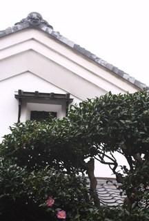 20111109 今年の山茶花は可愛いいピンク.jpg